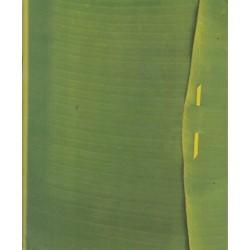 Blank Book (Green Folder)