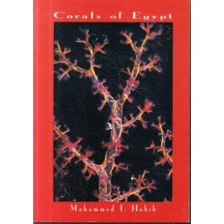 Corals of Egypt