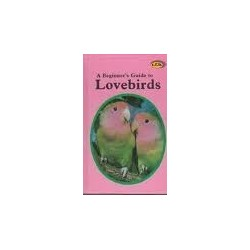 A Beginner's Guide to Lovebirds